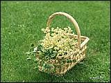親親大自然(二) - 戶外休閒 13 - [wall001.com]_women_nature_13.jpg